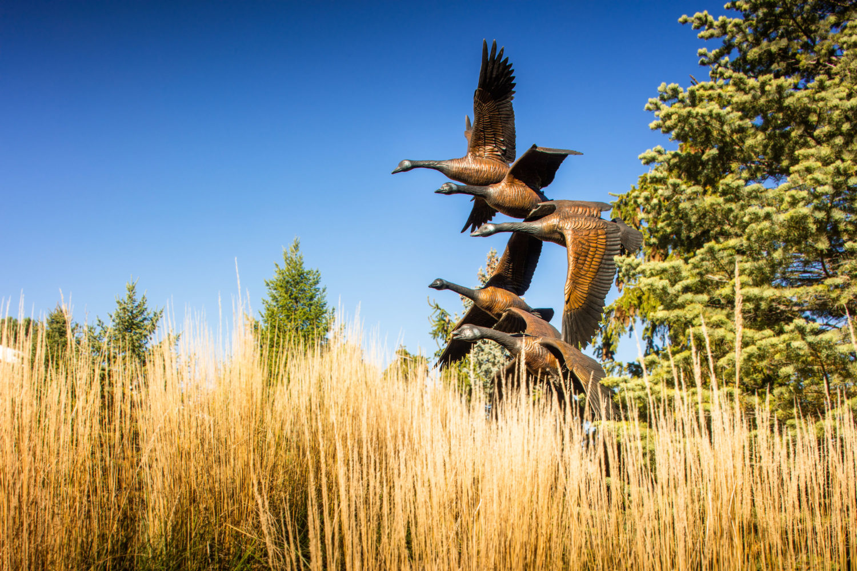 Bronze geese statue