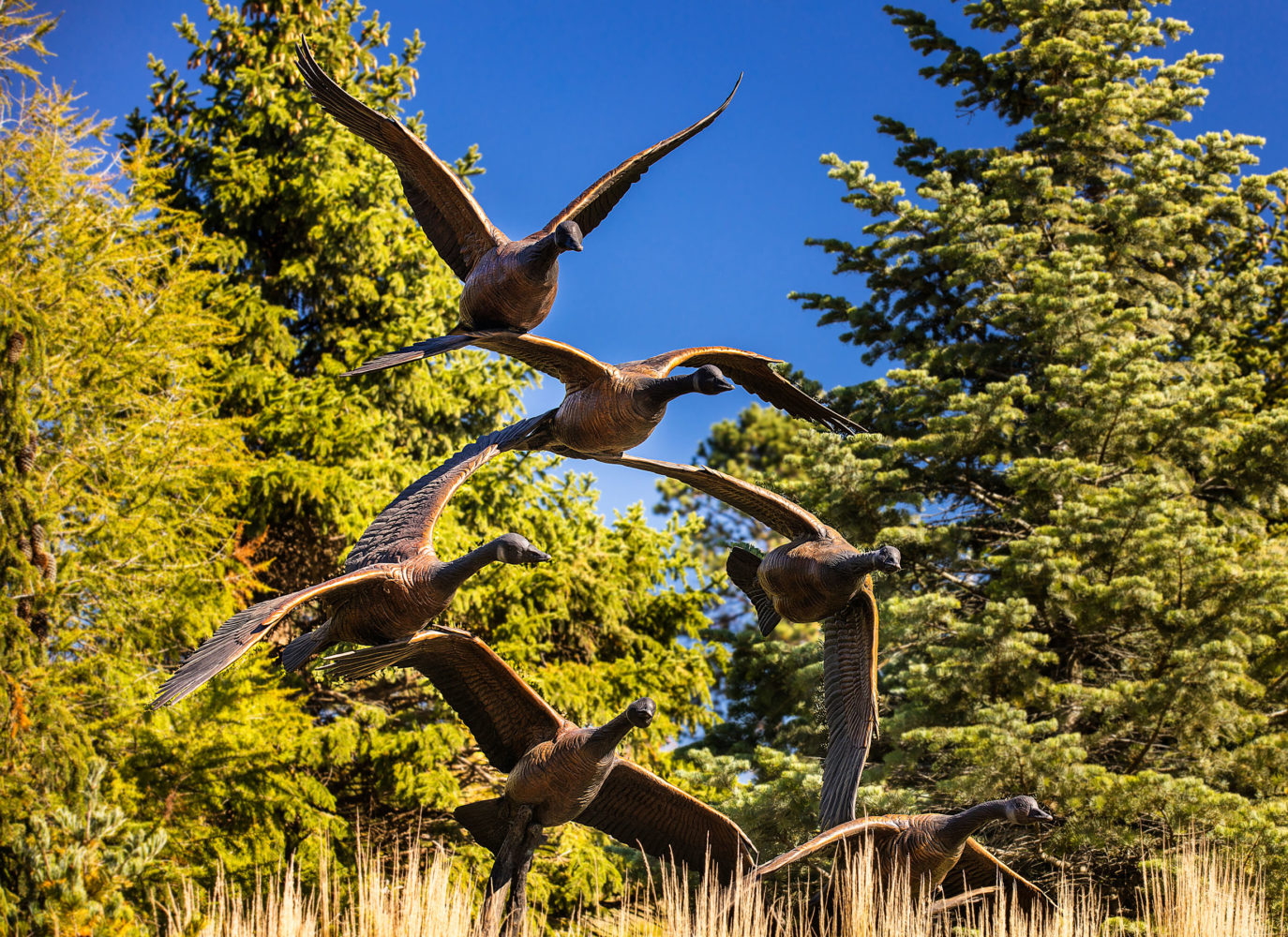 Tranquil arrival bronze geese sculpture