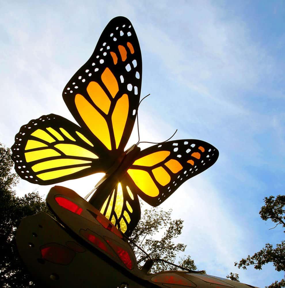 Monarch Butterflies in the sun